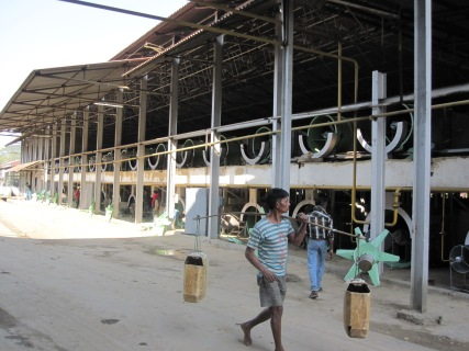 Tea processing factory