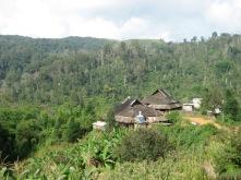 Tea Village in Yunnan